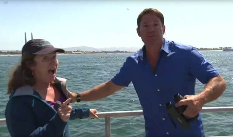 Grabs from BBC YouTube video of Bug Blue Live in which presenter Steve Backshall has to interrupt an interview because a blue whale has surfaced nearby https://www.youtube.com/watch?v=T2Xsfb4cT9Y
